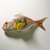 A fresh red sea bream with lemon slices