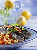 Parsley trout cooked in roasting sleeve with tomatoes