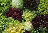 Lettuce Still Life; Close Up