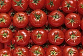 Tomatoes with drops of water, laid in rows, filling the picture