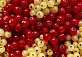 Many Red and White Currants