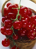 Red Currants; Close up