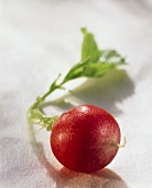 A radish with drops of water on light background