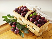 Lots of fresh damsons with drops of water in chip basket