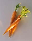 Three carrots with tops on a grey background