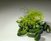 Fresh pickling cucumbers with drops of water and dill