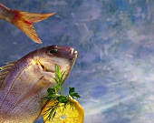 Still Life with Bream, Lemon and Spices