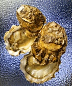 Opened oysters on a sheet of glass