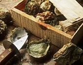 Austern in Holzkiste, daneben geöffnete Auster und Messer