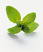 A sprig of mint on white background