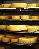 Cheeses in maturing cellar (Fonti Farm, Australia)