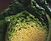 Savoy cabbage, cut in half (close-up)