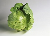 A white cabbage on light background