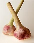 Two fresh garlic bulbs
