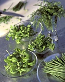Herbs on Glass Plates