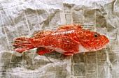 Scorpion fish on newspaper