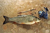 Chub on brown marble with fishing reel and lead