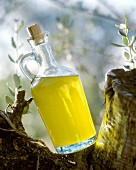A carafe of olive oil on a tree trunk