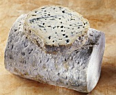 Fourme d Ambert, French blue cheese