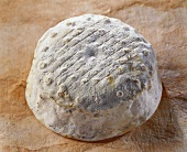 Le Provence, a French goat's cheese, on brown background