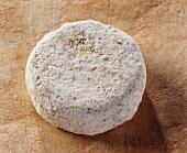 Picodon de L Ardeche, a French goat's cheese
