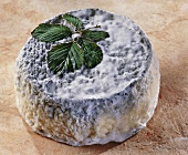 Quercy, a French goat's cheese, with leaves