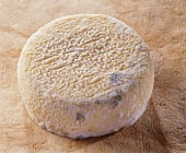 Pigouille, a French sheep's cheese, on reddish background