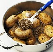 Cooking caraway potatoes