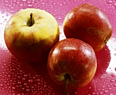 Three Elstar apples on a pink background with drop of water