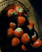 Fresh strawberries in a straw hat