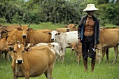 Thai man with cows in pasture