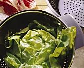 Kopfsalat in einem Edelstahlseiher