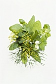Herb bouquet with dill, sage, basil, parsley