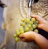 Washing green grapes