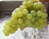 Washing green grapes under running water in sink