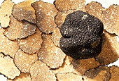 Black truffles on truffle slices