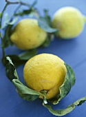 Lemons with stalk and leaves