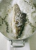 Barsch, in Salz eingelegt, in einem Topf