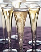 Several champagne glasses on purple background