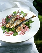Sarde e cipolla (Grilled sardines with onions, Italy)