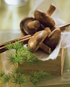 Shiitake mushrooms on paper in small wooden box with chopsticks