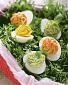 Various stuffed eggs on fresh parsley