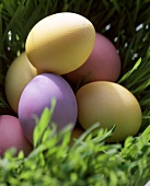 Coloured eggs in a meadow as Easter decoration
