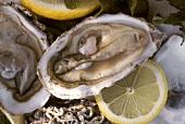Geöffnete Austern mit Zitronenscheiben