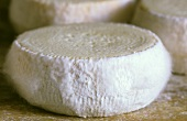 Cream cheeses (sheep's cheese) from Corsica
