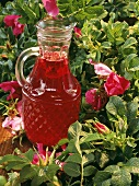 Rose hip juice in a carafe among wild rose bush