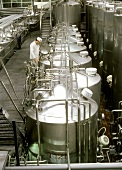 Technician at fermenting tank in a yoghurt factory