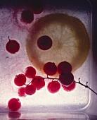 Frozen redcurrants and a lemon slice
