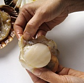 Taking a scallop out of its shell