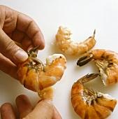 Shelling cooked jumbo prawns